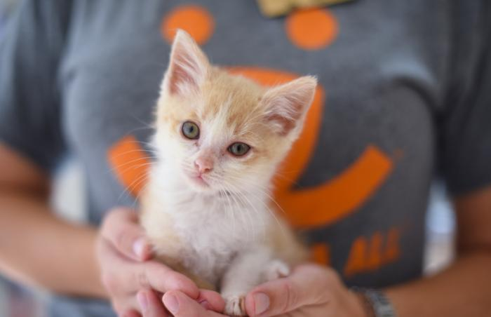 Round-the-clock care brings starving and sick kitten Topeka back from the brink