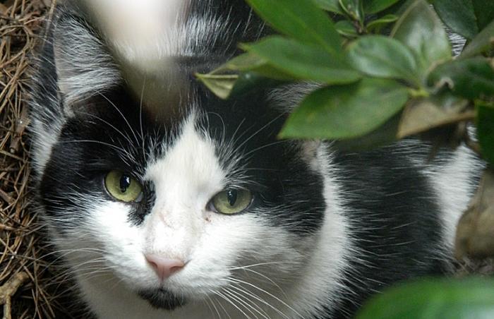 Oreo was helped through the Best Friends DeKalb Community Cat Program