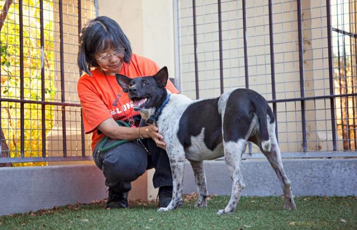 Volunteer Luci socializing a shy dog from a hoarding case