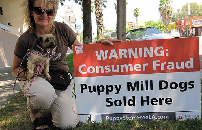 Lindsey Reeves protesting with her adopted puppy mill Yorkie Eliza Doolittle