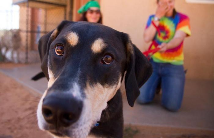 Elwood the hound dog who is terrified of the sound of trucks at Best Friends Animal Sanctuary