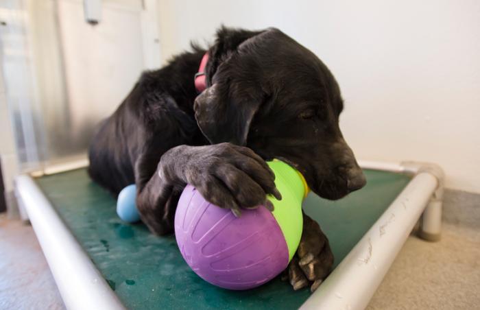 Eni the drug-sniffing dog