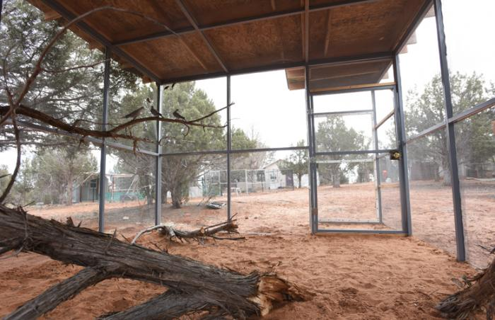 New flight aviary at Best Friends Animal Sanctuary helps rehabilitate birds