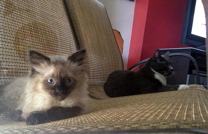 Harry the kitten who recovered from feline panleukopenia and the Lizel's cat Missy