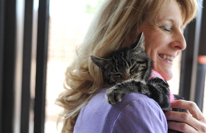 Marci the kitten comes to Best Friends Animal Sanctuary to heal