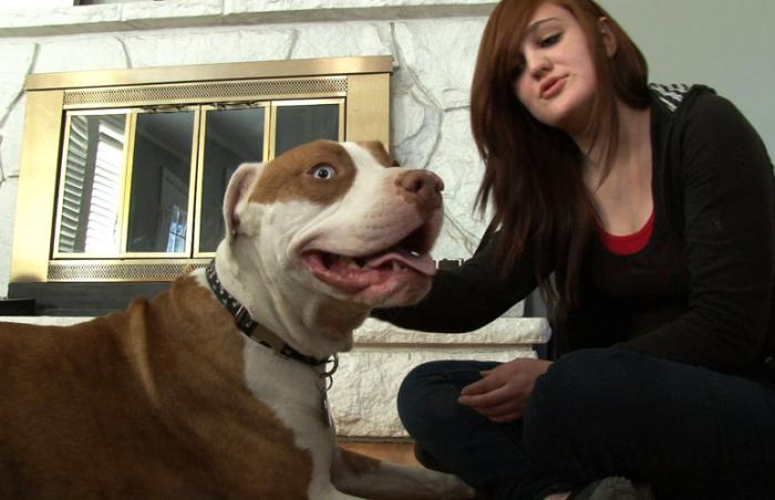Henessey the pit bull terrier with his adopter Nadia