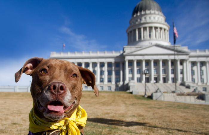 Dog posing in front of the Utah Capitol in support of positive and proactive animal legislation
