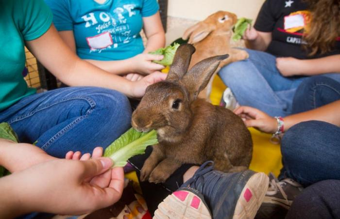Teen volunteers from the Re-Creation Retreat residential treatment center feeding a rabbit at Best Friends Animal Sanctuary