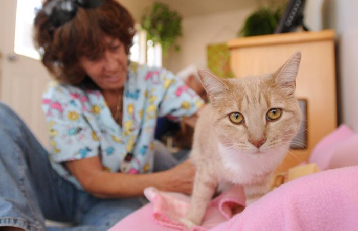 Rio the cat who used to be paralyzed receiving some physical therapy
