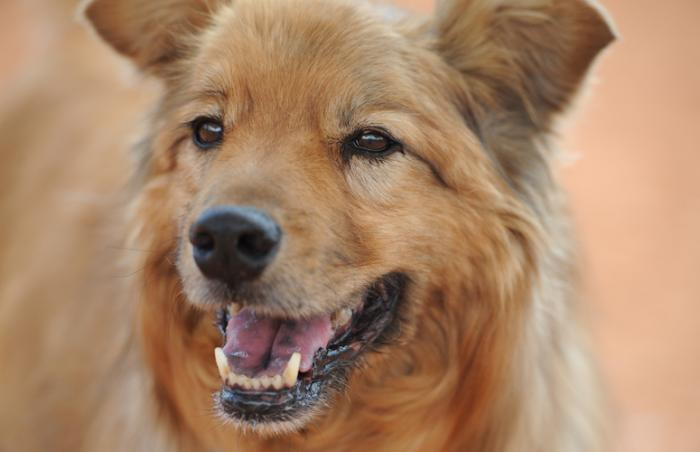 Rogue the fearful dog finds a home at long last