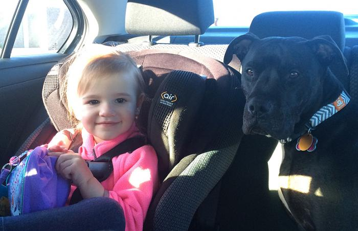 Roseanna the pit bull terrier dog with her adopted family's little girl Lily in the car
