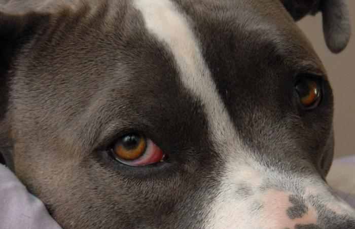close up of white and gray dog