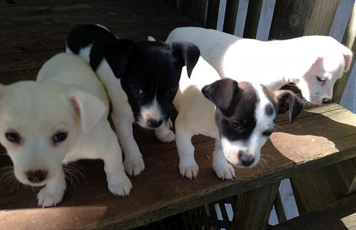 Puppies from Castaway Critters Pet Rescue