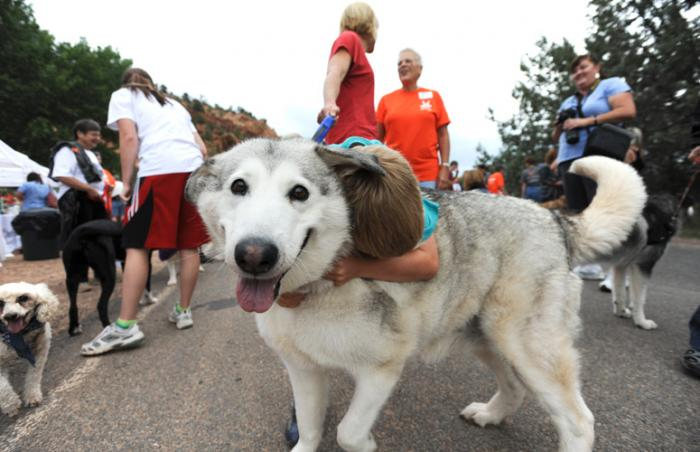 Large white dog at Strut Your Mutt, a dog charity walk event, in Kanab