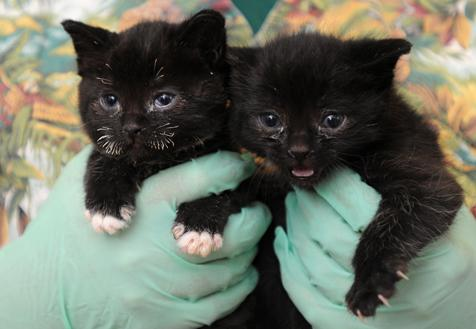 Two adorable black kittens rescued from fire