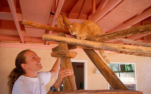 Cat from the Great Kitty Rescue in Pahrump, Nevada, exploring Cat World at Best Friends Animal Sanctuary