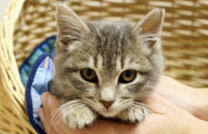 Annie the kitten from Best Friends Animal Society-Utah