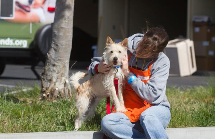 Volunteer dog trainer with a dog at an L.A. animal shelter