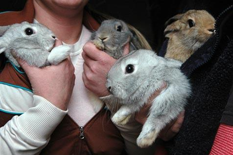 Four baby bunnies are now grown up