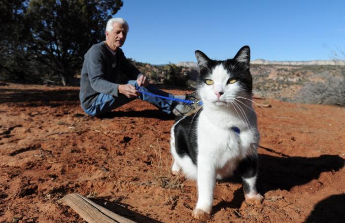 Bob goes on a cat hike with Ed