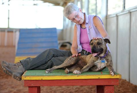Dogs in training program at Best Friends Animal Sanctuary