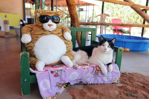 Cat hanging out at the imitation beach at Best Friends Animal Sanctuary