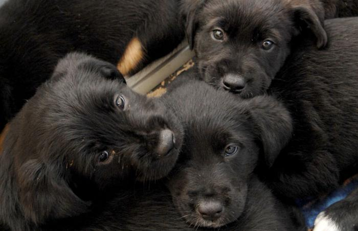 Puppies for shared resources Utah article