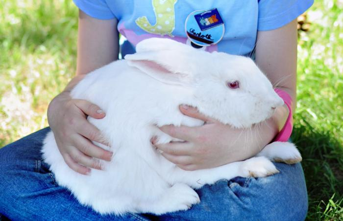 Rabbit held by Charlotte