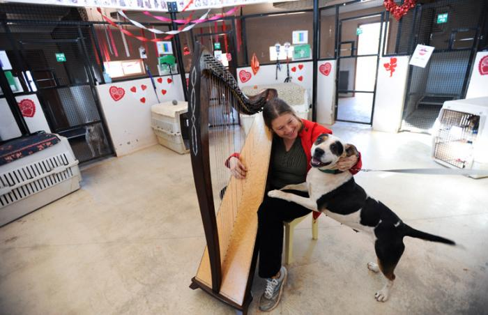 Ellen James plays the harp for Mama Mia the dog