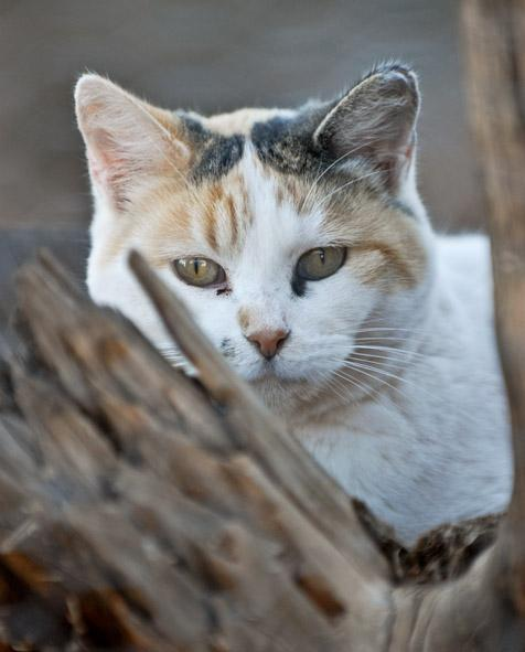 White cat in tree with brown and black spots around the ears