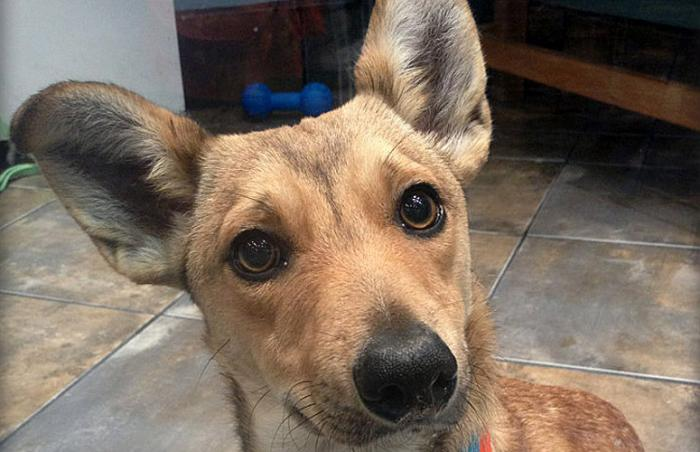 Fox the dog, adopted from Adopt & Shop