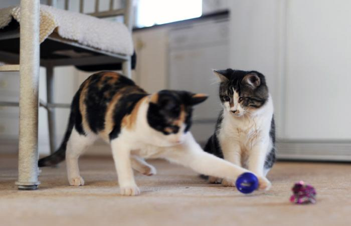 Hansel and Gretal the kittens with vision impairment