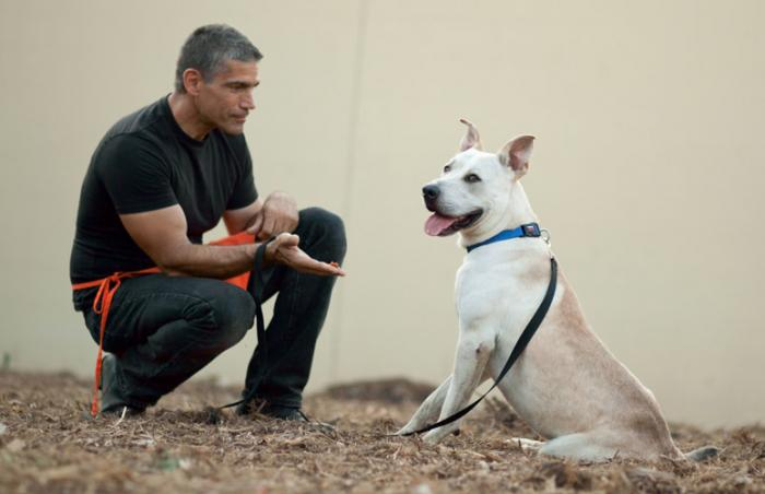 "Ranger the high-energy ""crazy"" dog gets training to sit and be calm from volunteer trainer John"