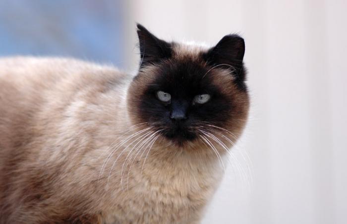 Eartipped cat from TNR effort on Navajo Nation