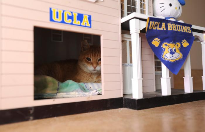 Sunny the cat in his house that the UCLA students assembled