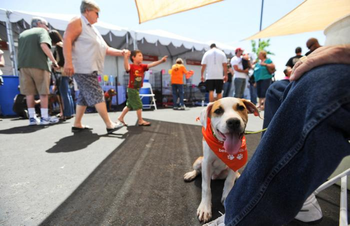 St. George Pet Super Adoption, a huge success