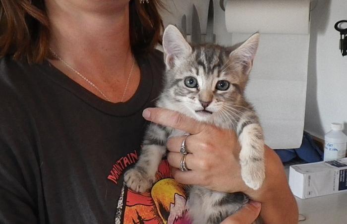 Kitten from Oregon Outback Humane Society