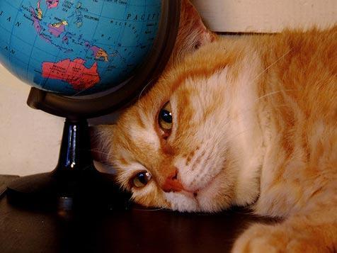 Orange tabby cat resting under a world globe