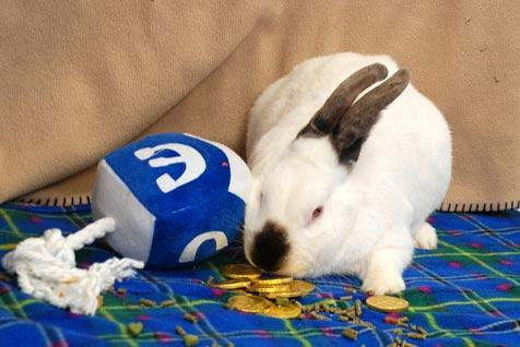 Bubba the rabbit playing with a stuffed dreidel