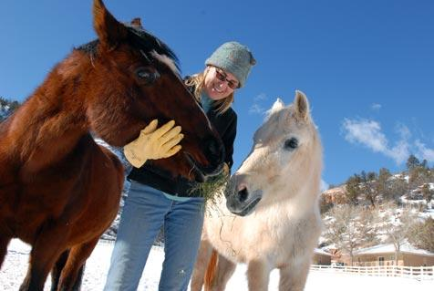 Two older horses with caregiver