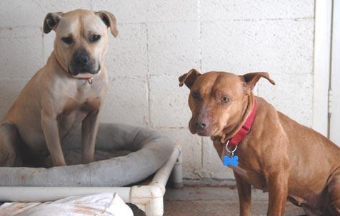 From dog fighting to dog snuggling, Handsome Dan and Little Red become friends.