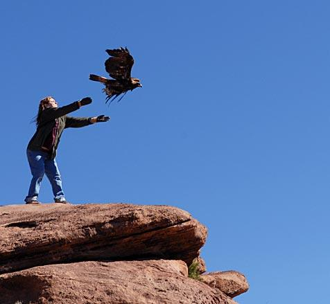 Barbara Weider, sub-permittee wildlife rehabilitator at Best Friends, releases the golden eagle on the edge of Angel Canyon