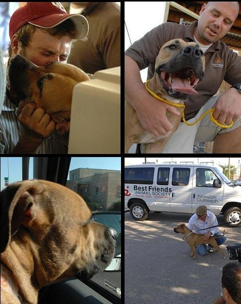 Forrest the pit bull who was saved from being killed due to Denver, Colorado's pit bull ban