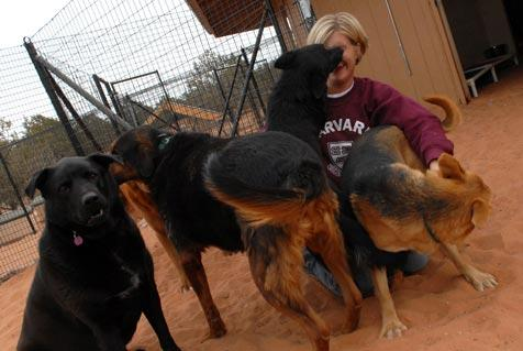 Dogs from hoarding situation and their caregiver at the Sanctuary