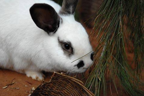 Bunny Tree Recycling