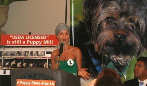 Actress Maggie Q advocating for a puppy-store-free LA