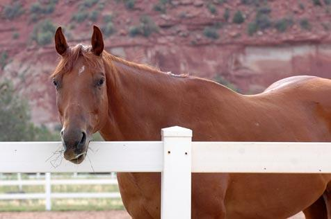Brown horse named Rocky