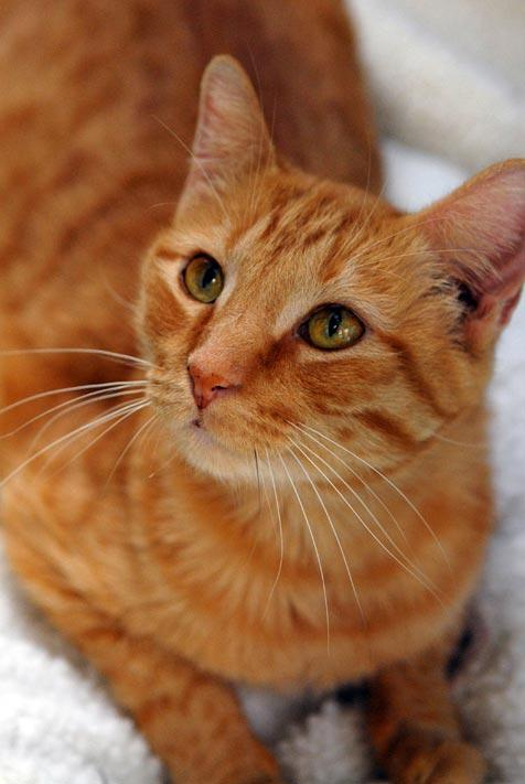 Orange tabby cat who was thought to be paralyzed can now walk