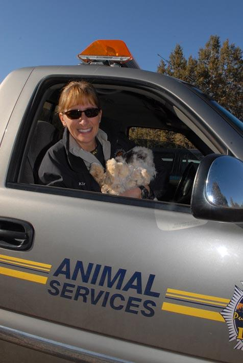 Animal control offer with an abandoned bunny