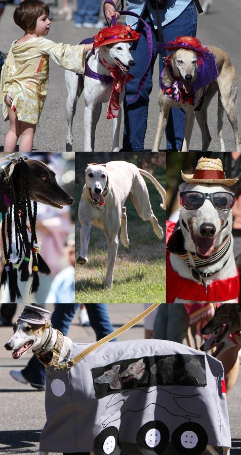Greyhound picture collage